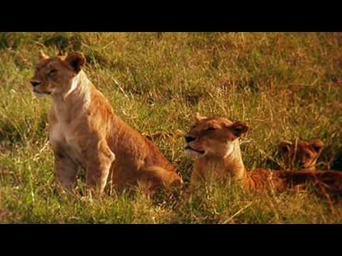 Earth - La savana africana