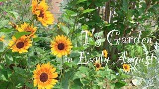 《8月上旬の庭》ガーデニング*真夏の庭に咲く花《T's Garden》