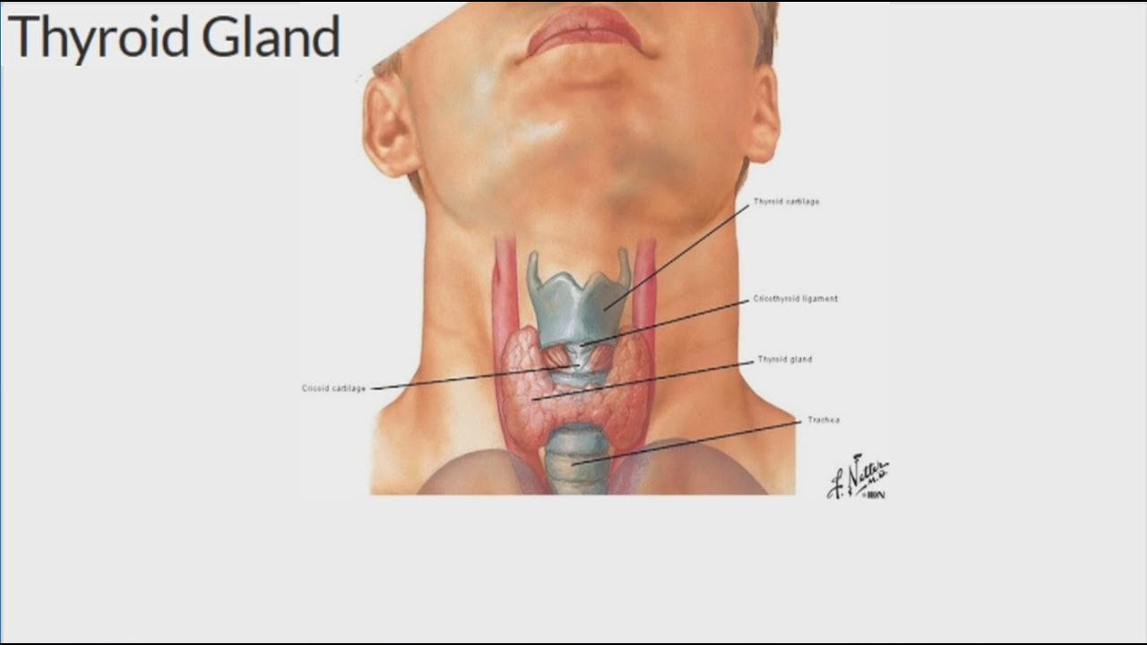 Head And Neck Surgeon Discusses Thyroid Cancer And Symptoms Other Disorders Youtube