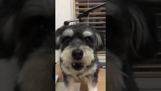 可愛い犬(∩˃o˂∩)