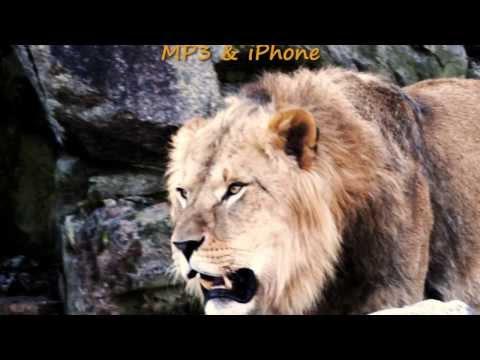 The lion roars - Ringtone