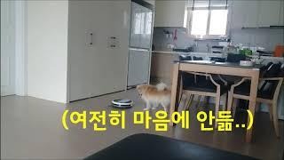 ( ※고막주의)로봇청소기를 처음 본 강아지의 반응은?(…
