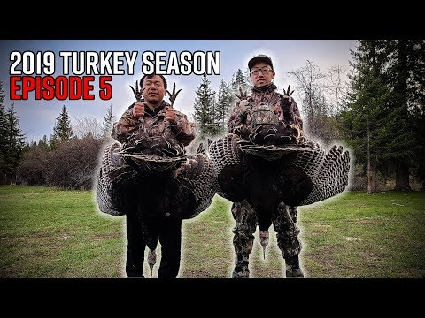 Doubled Up With A Double Bearded Gobbler! Washington Spring Turkey Hunt | 2019 Hunting Season EP.05