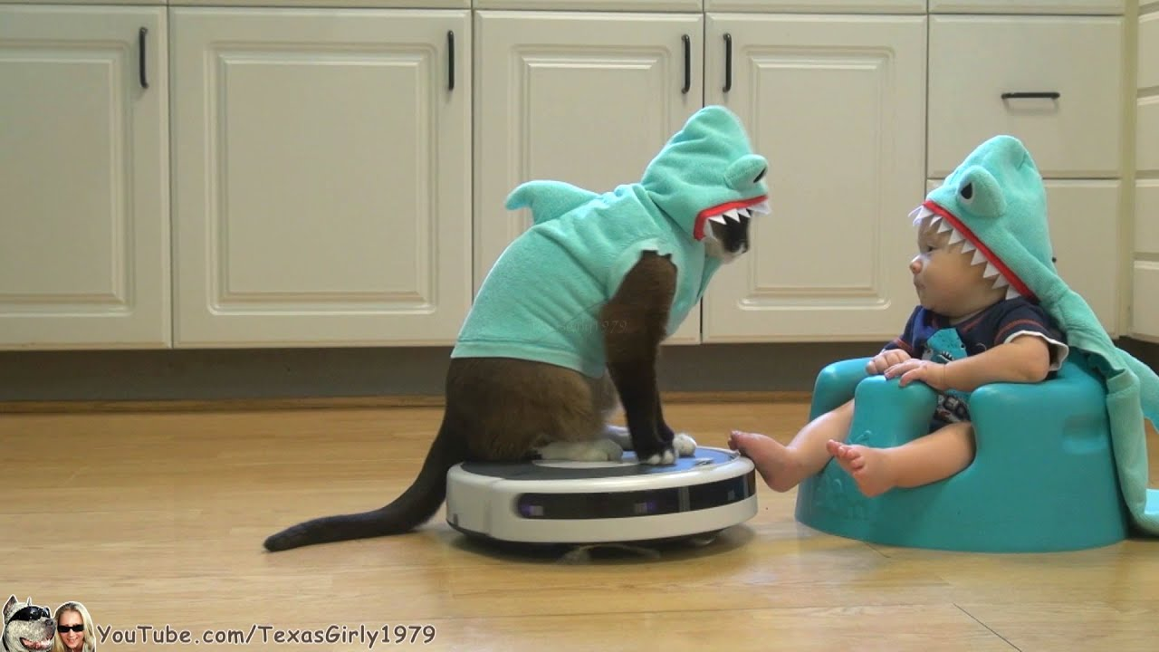 Cat And Dog In Shark Costumes