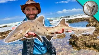 Catching a SHARK by HAND! thumbnail