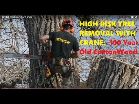 STIHL Chainsaws & CRANE: HUGE TREE REMOVAL in COLORADO (over a farmhouse!)