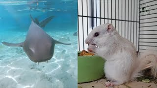 Funny Animals Or Best Friend ? ? ? 😍😍😍
