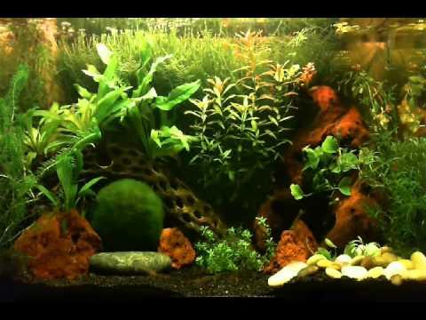 10 Gallon Planted Tank - YouTube 10 Gallon Fish Tank Ideas