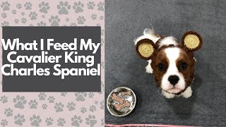 What I Feed My Cavalier King Charles Spaniel | Slater's Dog Food Journey