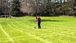 Ollie (boston Terrier) Boot Camp Dog Training Demo