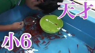 全国2位 金魚すくい 天才 thumbnail