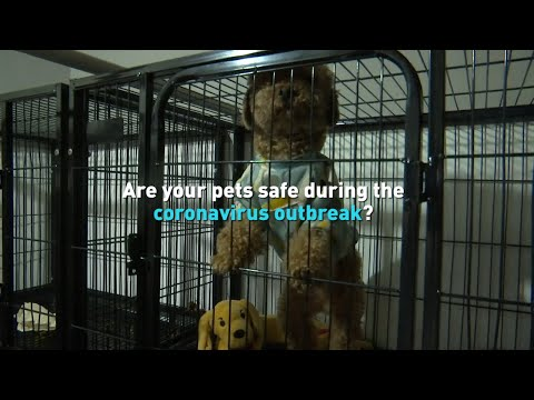 Are Your Pets Safe During The Coronavirus Outbreak?