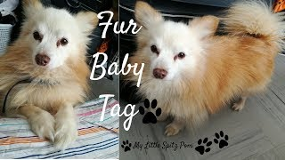 Fur Baby Tag (All about my dog)