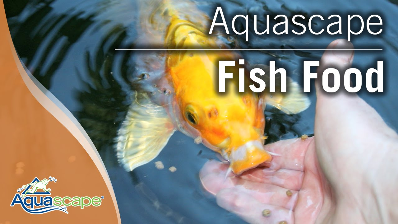 Raise Healthy Pond Fish with Aquascape Fish Foods