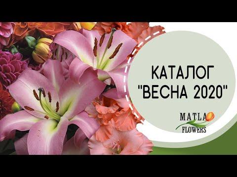 Каталог Весна 2020 (лилии, гладиолусы, георгины, клематисы, розы)