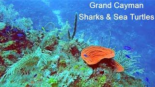 Grand Cayman Eden Rock Scuba Dive Sharks and Turtles