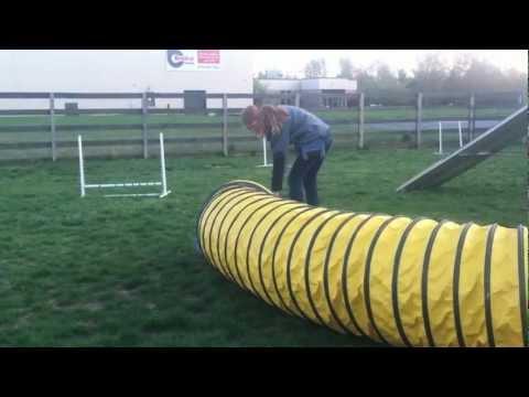 Ammo the Dachshund during Dog Agility Class - 2012