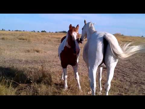 Two horses grooming each other.