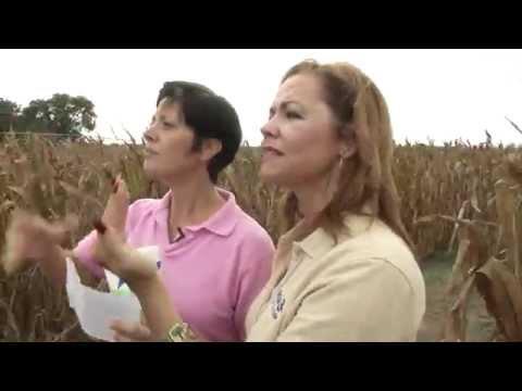 Ottawa Farms Corn Maze 2014