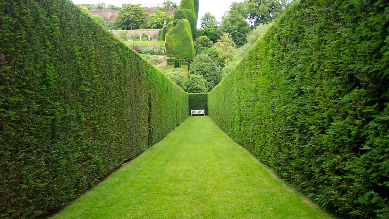10 09 2014 guberniatv youtube - Alberi da giardino a crescita rapida ...