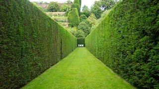Живые изгороди в ландшафтном дизайне: виды и особенности. Фото, видео