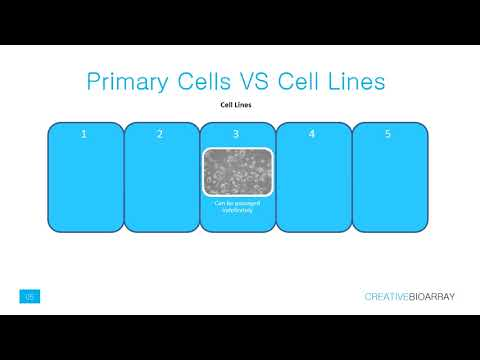 Primary cells culture