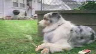 Как Собака курит