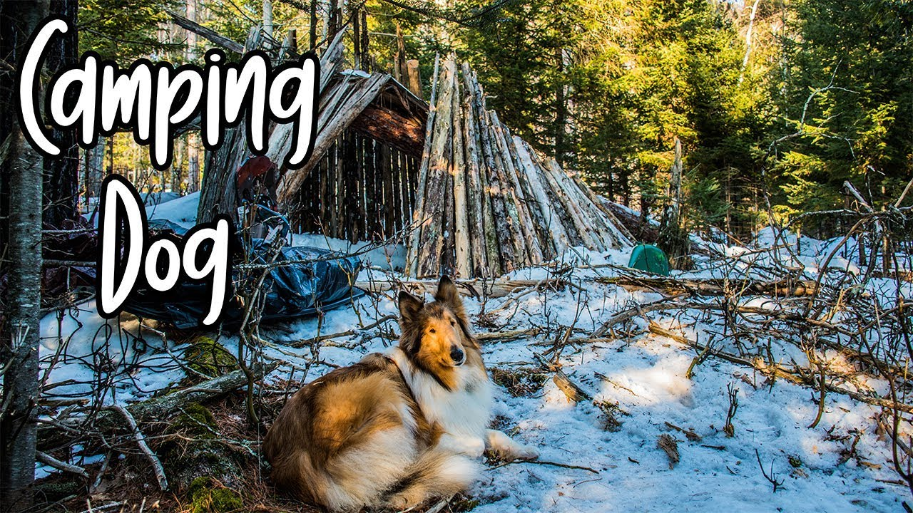 Overnight Winter Camping with My Dog - YouTube