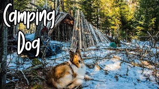 Overnight Winter Camping with My Dog