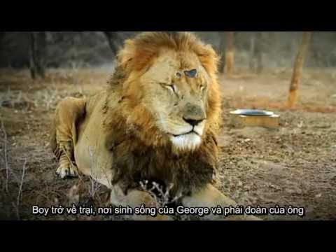 A lion called Christian (vietsub)