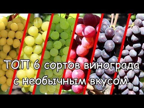 ТОП 6 сортов винограда с необычным вкусом