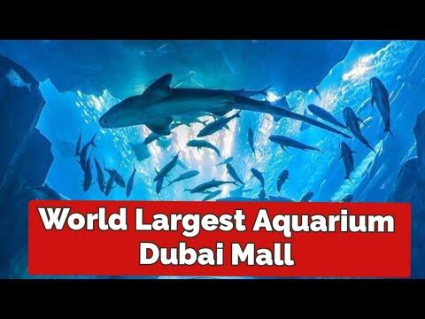 Sharks Dubai Aquarium Underwater Zoo. Dubai Mall
