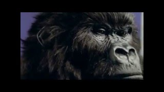 Dairy milk gorilla advert