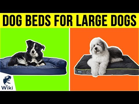 10-best-dog-beds-for-large-dogs-2019