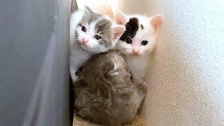 隙間にすし詰め状態の赤ちゃん猫