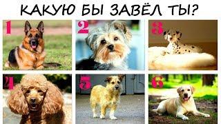 Интересный ТЕСТ! Собака, которую ты выберешь расскажет ВСЁ о тебе!