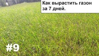 Как вырастить газон за 7 дней. Посадка травы.