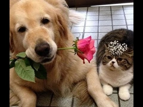 Two pets owners helped their dog and cat find love together