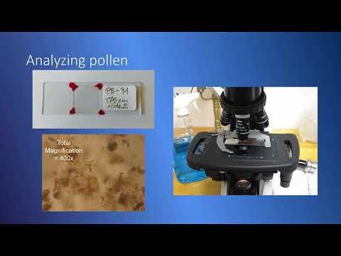 Fossil Pollen Analysis
