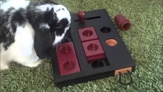 Bunny Playing with his Mini Mover Logic Toy