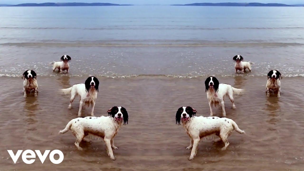 Tilda Swinton's dogs romp