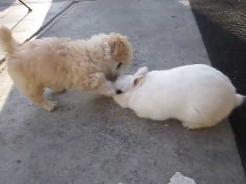 The first meeting of my puppy and bunny