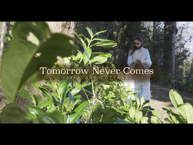 Tomorrow Never Comes - Fairyland Cottage