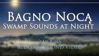 🎧 [DEEP RELAX] 🔊 Dźwięki BAGNA NOCĄ Żaby Świerszcze | SWAMP SOUNDS at Night Frogs Crickets