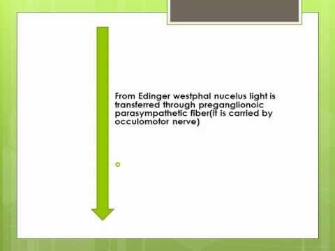 PUPILLARY LIGHT REFLEX PATHWAY