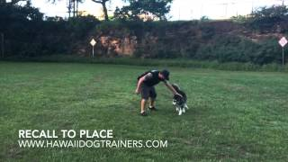 Amazing Transformation of 6 Month Old Husky/Malamute Mix: Dog Training Hawaii