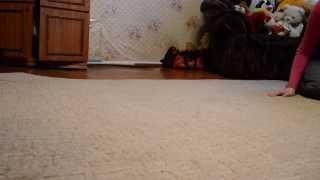 Щенки азиата на продажу(от Гильдияр Шай Сеп и Михайловская Слобода Шерден 45 дней ., 2014-01-19T13:58:06.000Z)