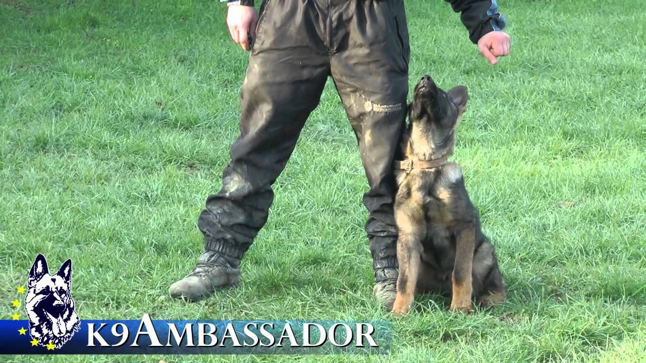 Top Dog K Training Academy