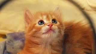 умиление и озорство - рыжий котенок девчонка :)