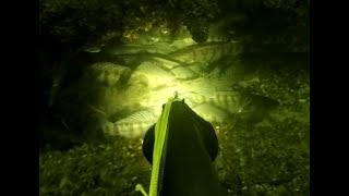 Зимняя подводная охота отличный улов и новый трофей